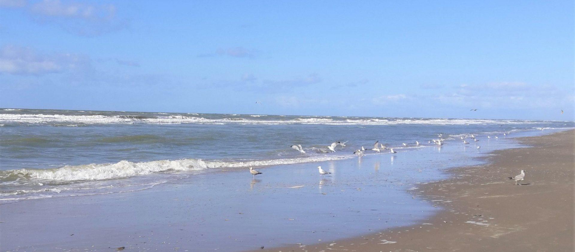 Borstvoeding Aan Zee